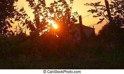 Sunset. Rural landscape backlit by sun. Sunflares