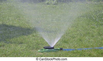 Sprinkler spaying water over green grass at residential lawn...