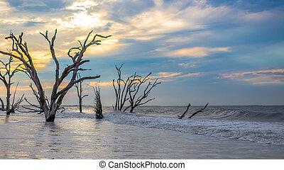 botánica, playa, bahía