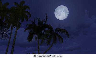 Palm silhouettes under full moon - Palm trees silhouetted...
