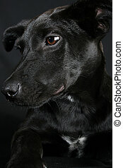 Mixed Breed Puppy - Big eyed, Mixed breed puppy with black...