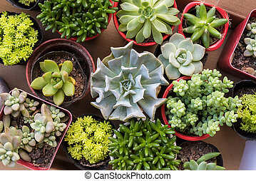 group of colorful succulent plants