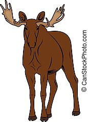 Vector Illustration of a Moose. American Elk vintage Symbol
