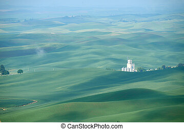 green hill area - green wheat hills of farming crop area in...