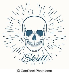 skull and vintage sun burst frame, excellent vector...