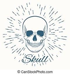 skull and vintage sun burst frame, excellent vector...