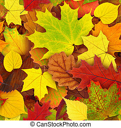 Autumn leaves seamless pattern - Seamless colorful autumn...