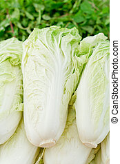 Chinese Cabbage on market