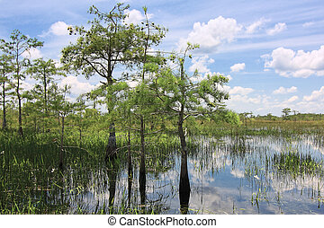 Everglades Landscape 8 - Beautiful scene of the Florida...