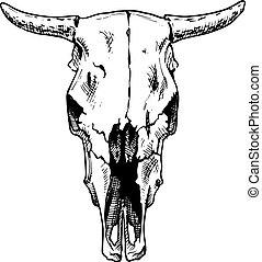 bulls skull