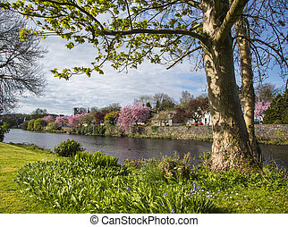 Springtime at Newton Stewart - On the pretty banks of the...