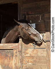 Brown horse in a stable - Louisville, Kentucky, United...