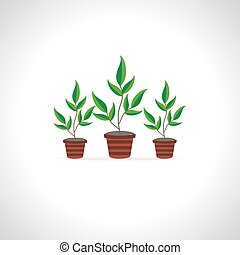 many flower pots over white background
