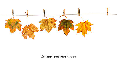 Maple leaves on clothespins with the word autumn, isolated...