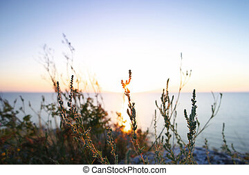 Silhouettes dry grass against Sea of Azov horizon -...