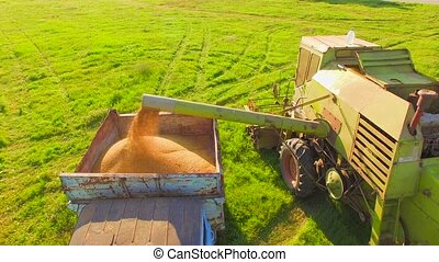 AERIAL VIEW. Combine Harvester In Action On Wheat Field,...