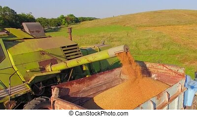 AERIAL VIEW. Pouring wheat into truck - AERIAL VIEW....