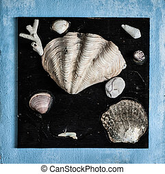 Shells on black background - Shells, corals, spongy stone on...