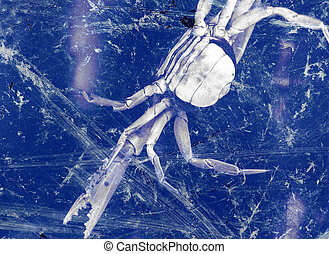 Seabed - Frozen in glass or deep water crab. Abstraction