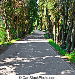 Forest Road - Asphalt Forest Road in Italy