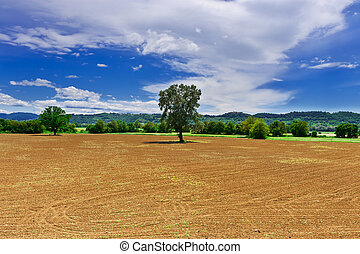Plowed Fields - The Medieval Italian Town Surrounded by...