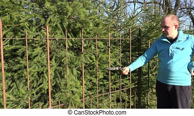 man cut hedge secateurs - Gardener man cut fir tree hedge...