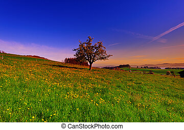 Flowering Tree - Solitary Flowering Tree Surrounded by...