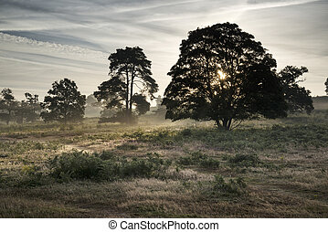 Misty landscape during sunrise in English countryside...
