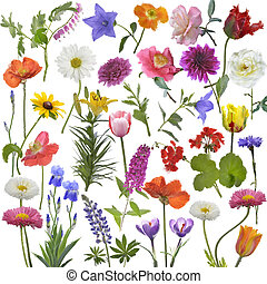 Flowers Watercolor - Digital Painting Of Flowers For...