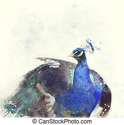 Indian Peafowl Watercolor - Digital Painting Of Indian...