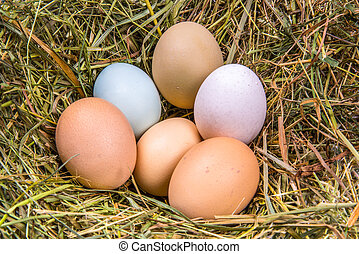 six eggs in different colors and sizes on a bed of hay -...
