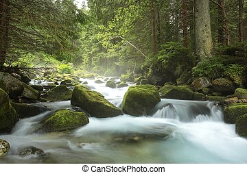 Forest stream Tatra national park, the Carpathians