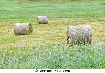 Three hay rolls on a field