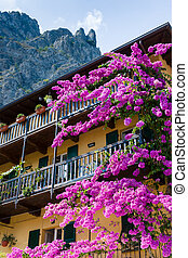 Bougainvillea Flowers at Sirmione Lake Garda Italy, -...