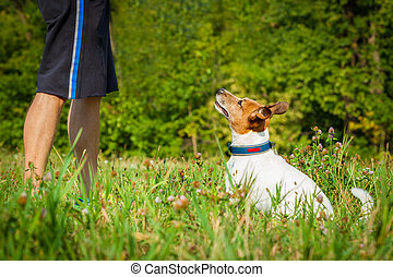 dog and owner teaching - jack russell dog and owner waiting...
