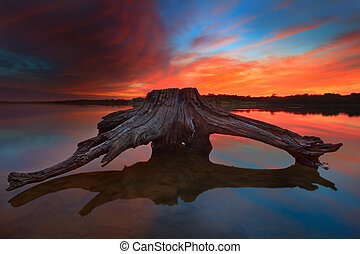 Driftwood at Sunrise - A piece of driftwood at Longview Lake...