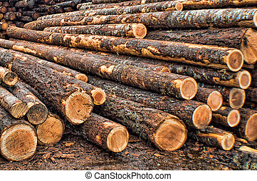Timber - raw materials for building