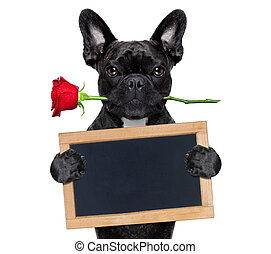 valentines rose dog - valentines french bulldog dog in love...