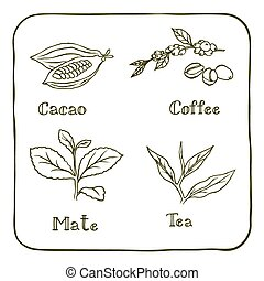 Various herbals - coffee, mate, cacao and tea