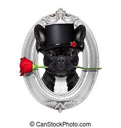 rose valentines dog - valentines french bulldog dog in love...