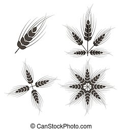 Vector Ears of Wheat Set Isolated on White Background