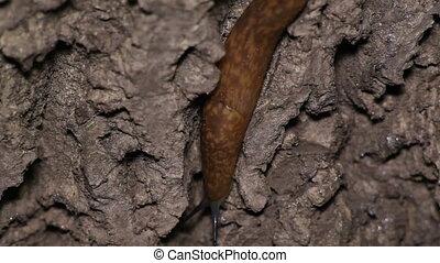 Slugs Crawl on Wood. Night Scene