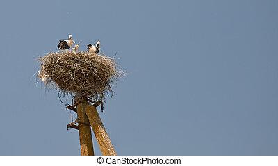 Storks.,
