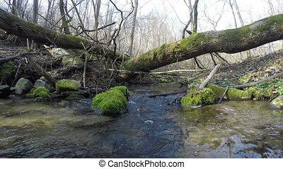 wild brook log moss - Closeup of wild brook water flow and...