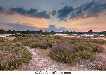 Shifting sands and heathland in Soesterduinen nature reserve...