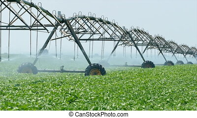 Agriculture soy bean plant watering - Soybean field with...