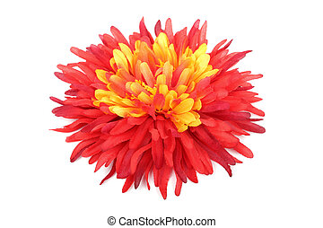 Red with yellow daisy head isolated on white background