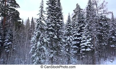 Beautiful winter forest in blizzard Top view Panorama...