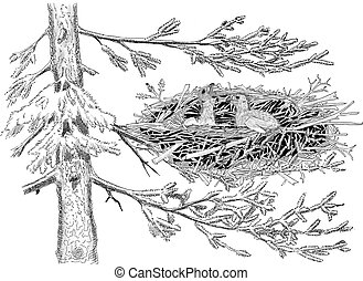 Golden Eagle Nest - Golden Eagle - Aquila chrysaetos - nest