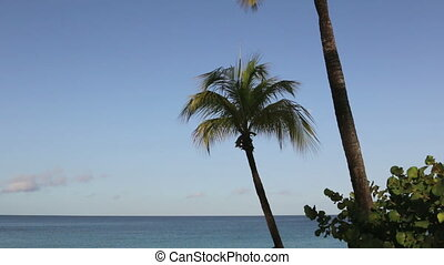 Palm trees with ocean